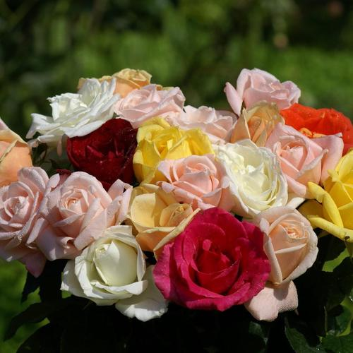 A lovely bouquet of different colored roses