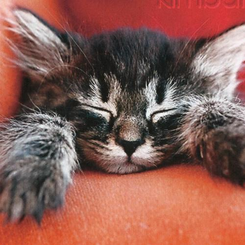 A Tabby Kitten Sleeping wallpaper