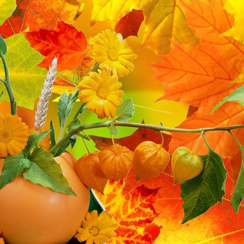 Abundance Of Fall Colors wallpaper