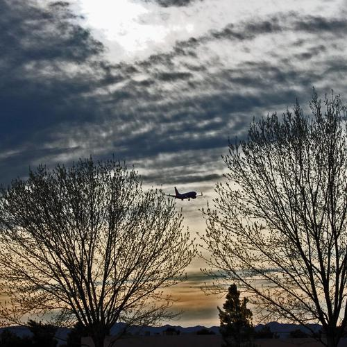 AirPlane flying over a tree in sunset