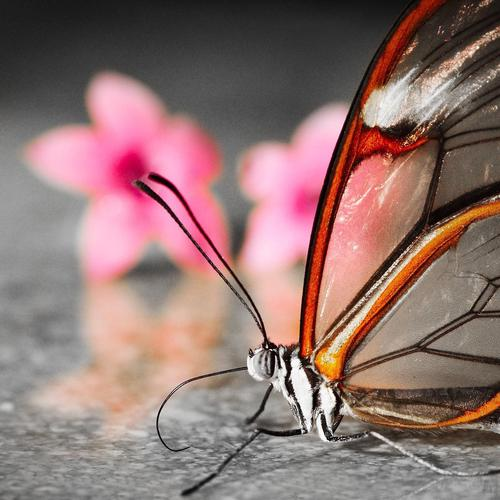 Amazing transparent butterfly wallpaper