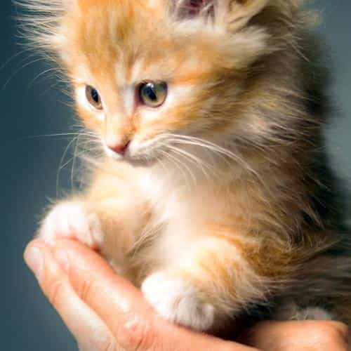 animal cute kitten cat nature