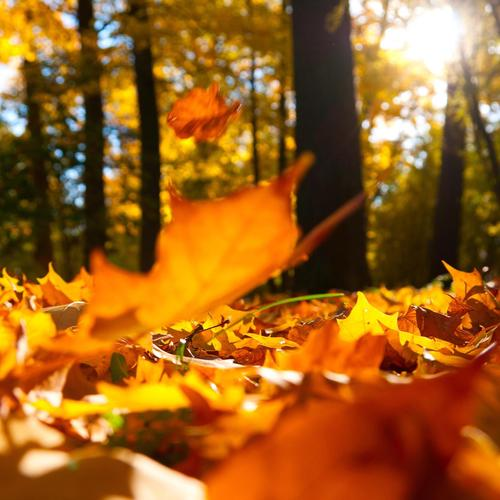 Autumn falling leaves ground wallpaper