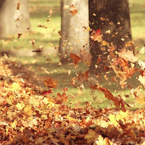 Autumn leaves blowing in the wind wallpaper