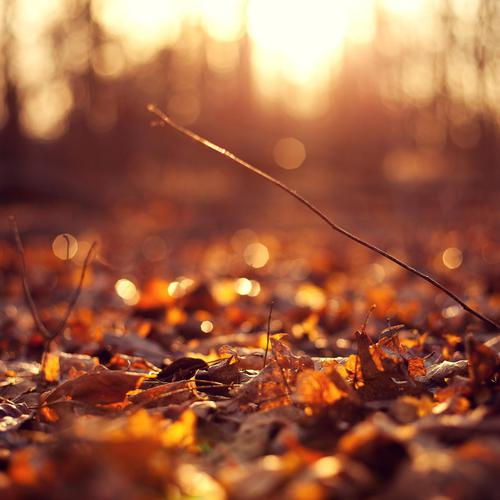Autumn leaves ground sunset wallpaper