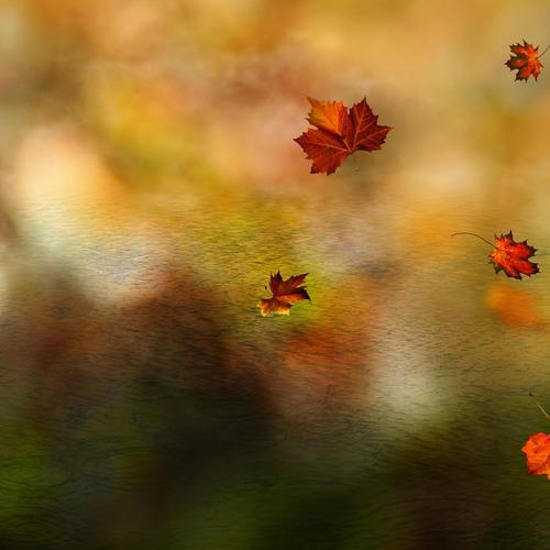 Autumn leaves in macro shot wallpaper