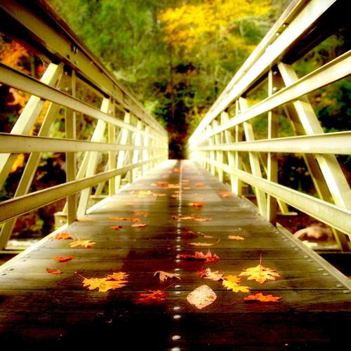Autumn leaves on bridge