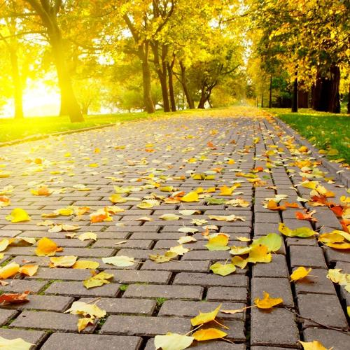 Autumn leaves walkway wallpaper