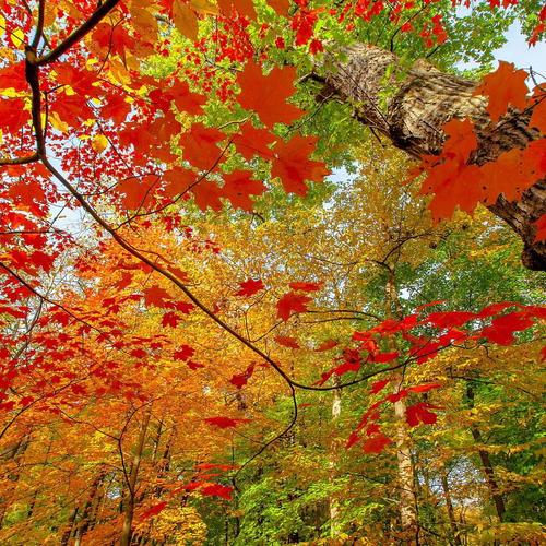 Sad Girl In Autumn Forest Wallpapers Html Wallpapers Page 1