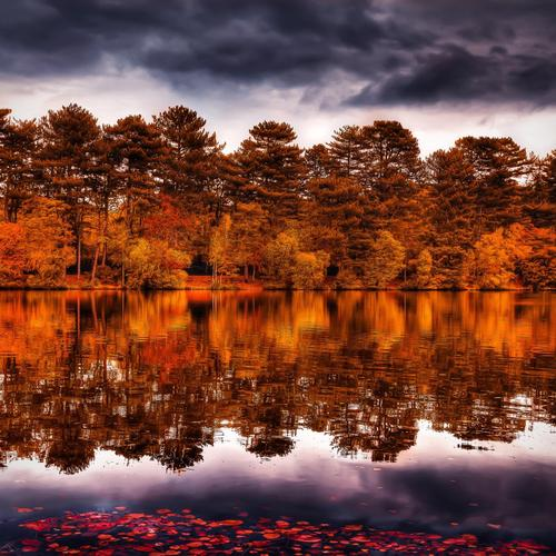 Autumn reflecion on the lake wallpaper