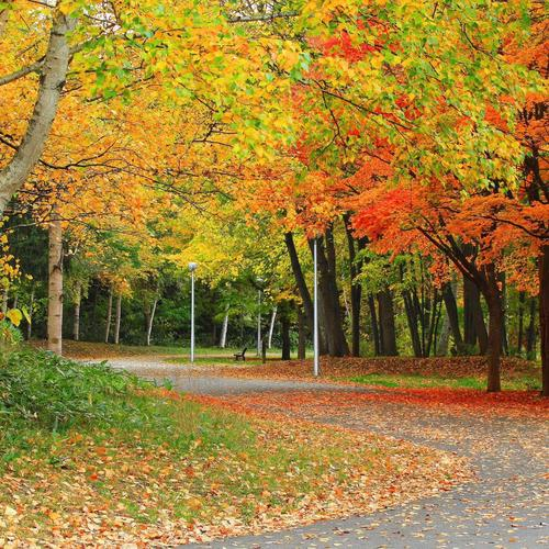Autumn road with orange leaves wallpaper