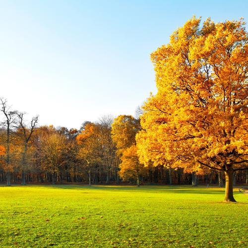 Autumn trees on green grass landscape
