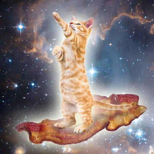 Bacon space kitty wallpaper