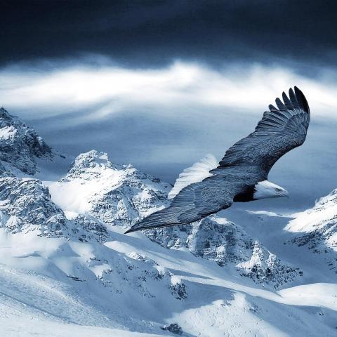 ダウンロード ハクトウワシは雪山の上を飛ん 高品質の壁紙