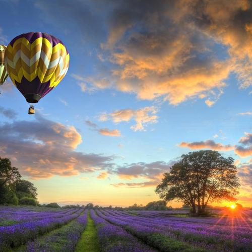 Balloons flight over purple field