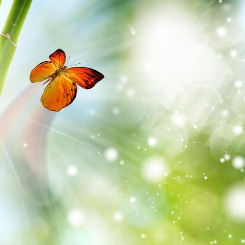 Bamboo and sparkling butterfly wallpaper