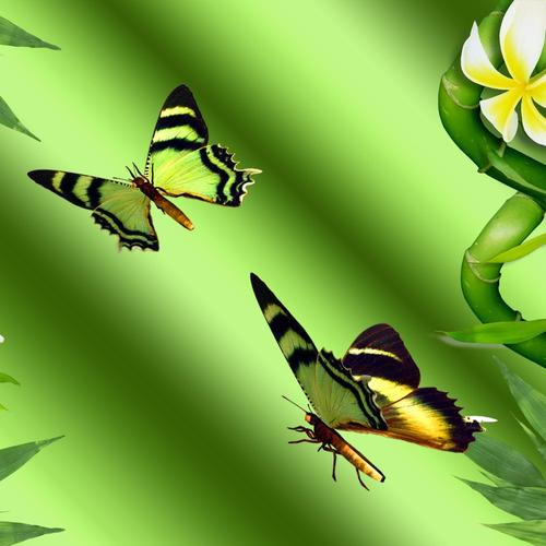 Bamboo butterflies collage wallpaper