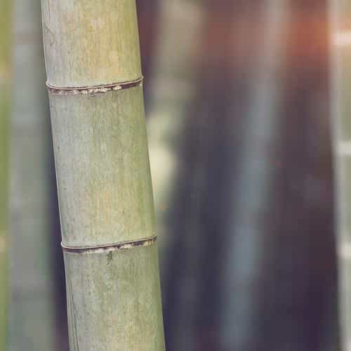 bamboo nature tree blue