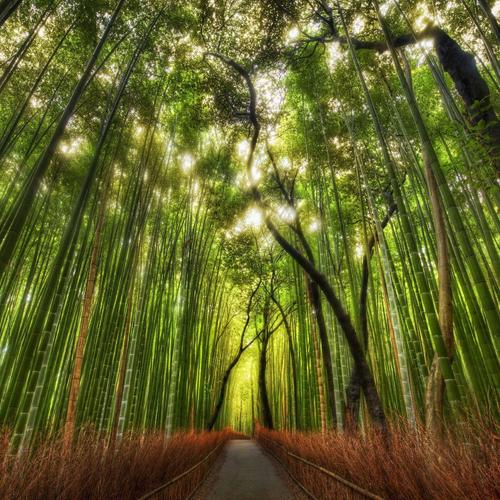 Bamboo walkpath wallpaper