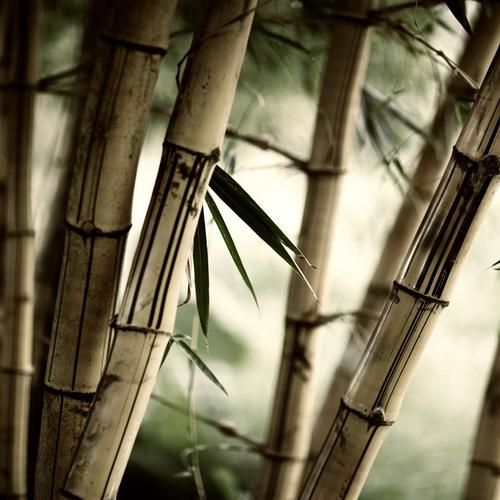 Bamboos macro shot wallpaper