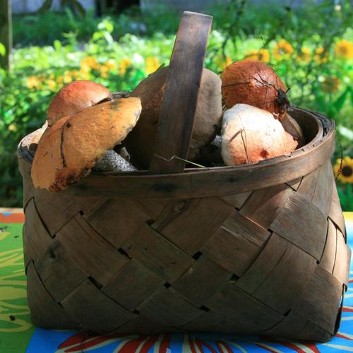 Basket Of Mushrooms wallpaper