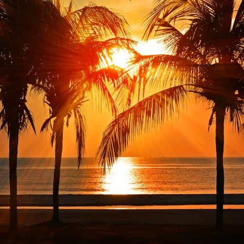 beach vacation summer night sunset red palm tree