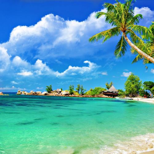 Beautiful beach with coconut tree wallpaper