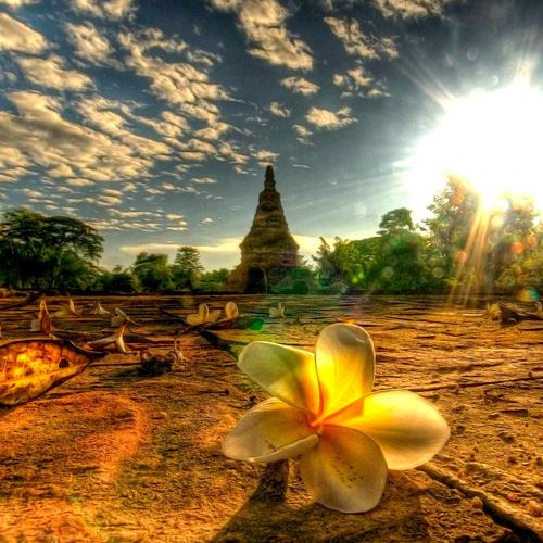 Beautiful flower at the temple wallpaper