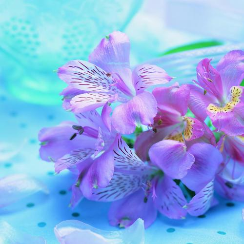 Beautiful fresh purple flowers wallpaper