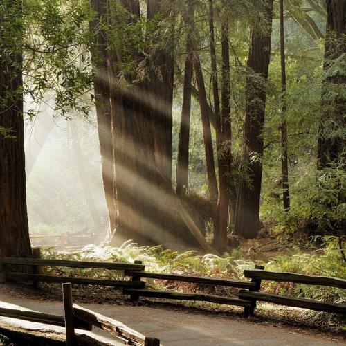 Beautiful Rays Illuminate The Forest wallpaper