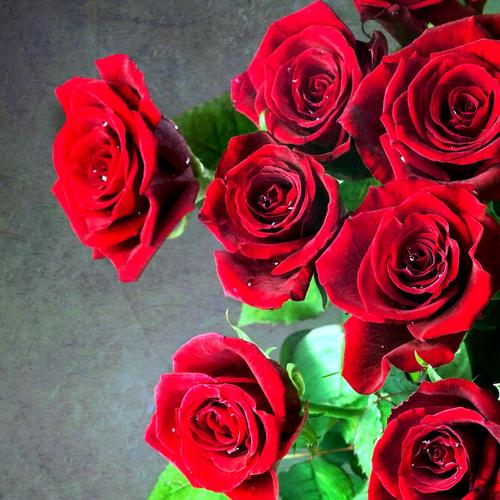 Beautiful roses bouquet wallpaper