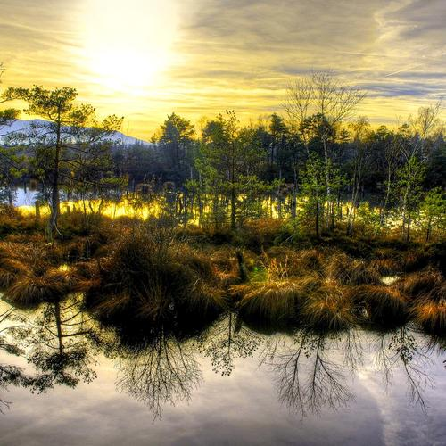 Beautiful swamp in the glory morning wallpaper