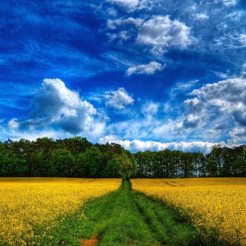 Beautiful yellow field landscape