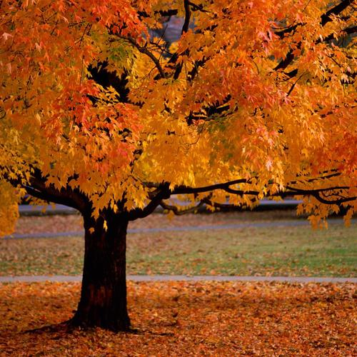 Beauty Of Autumn with orange leaves wallpaper