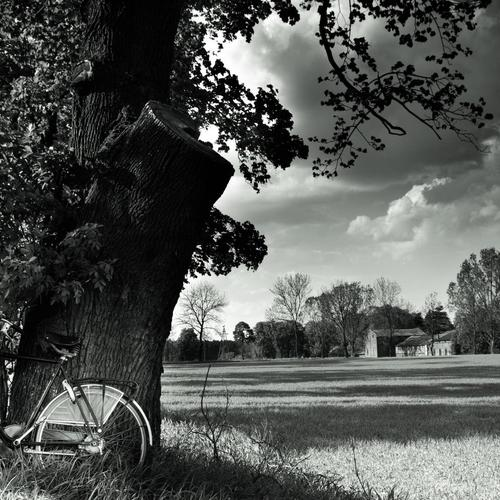 Bicycle in the country in black white wallpaper