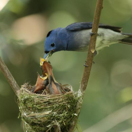 Bird feeding Babies wallpaper