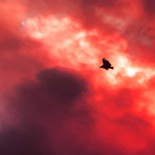 bird fly sky clouds red sunset fire nature animal