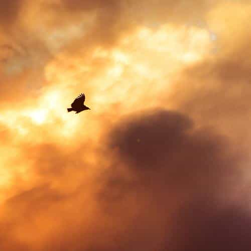 bird fly sky clouds red sunset nature animal flare