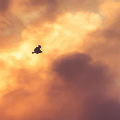 bird fly sky clouds red sunset nature animal