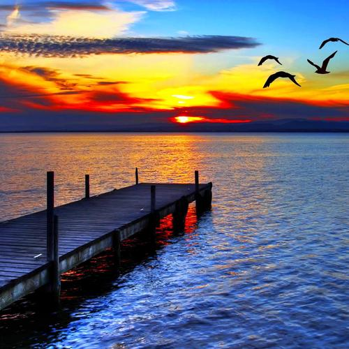 Birds flight in sunset wallpaper