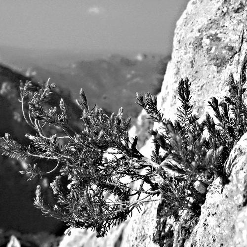 Black and white cliff