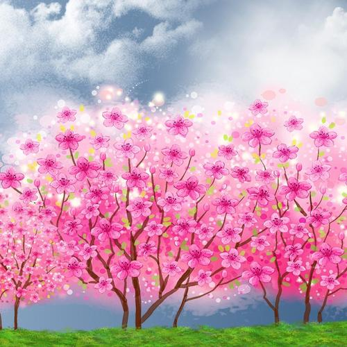 Blooming Sakura Spring wallpaper
