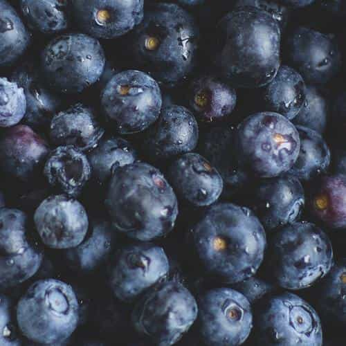 blue berry healthy fruit eat food nature