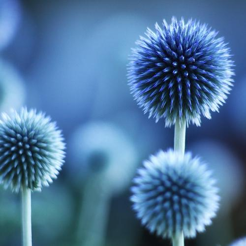 Blue spike petal flowers wallpaper