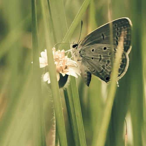butterfly eating time nature