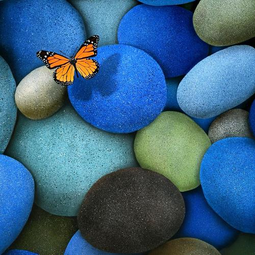Butterfly on blue pebbles wallpaper