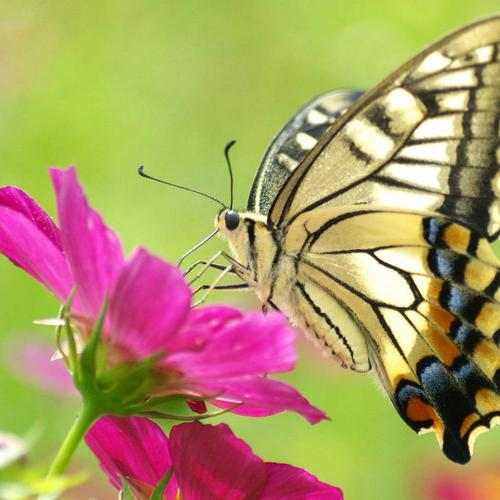 Butterfly rests on flower macro shot wallpaper