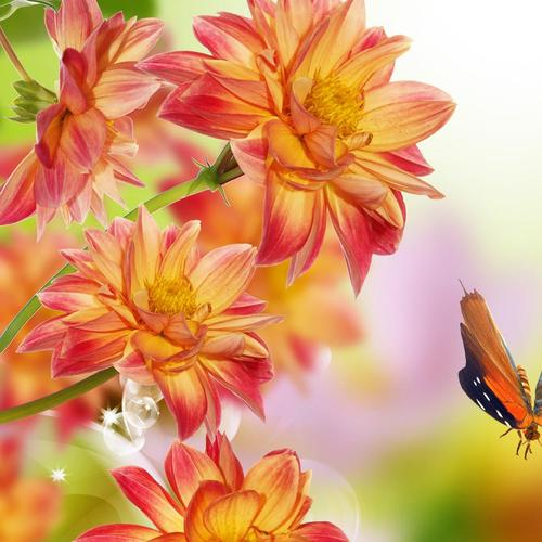 Butterfly vs orange flowers wallpaper
