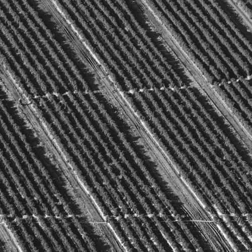 bw dark field nature pattern