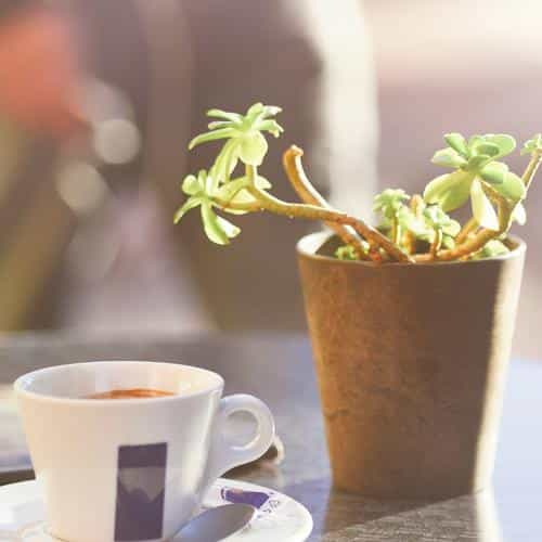 cafe coffee city bokeh life art nature